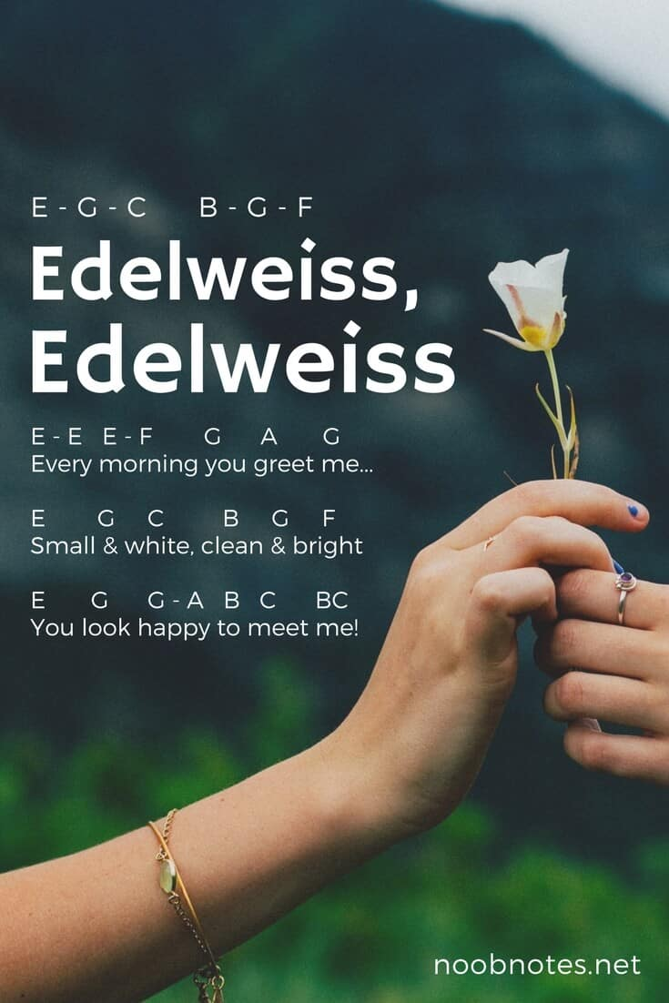 Edelweiss – Rodgers and Hammerstein letter notes for